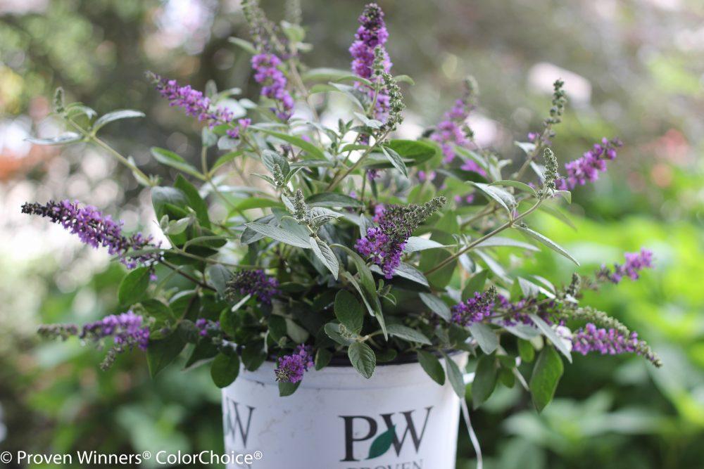 purple-flower-plant