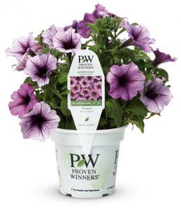 provenwinner_purple_flower