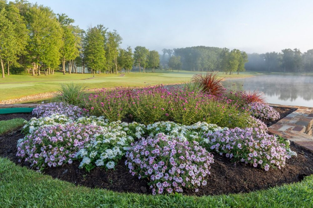 How to Maintain Your Landscaping